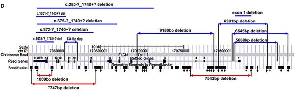 FLCN mutations