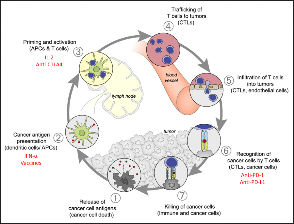 Cancer-Immune response cycle